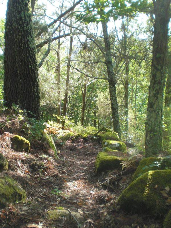 Camino en la ruta del bosque de los espejos