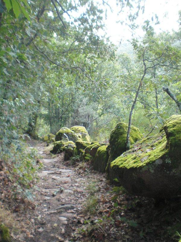 Camino del bosque de los espejos