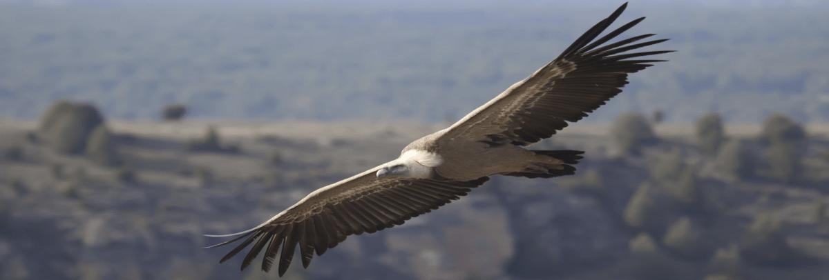 Reserva Natural de Buitres Leonados
