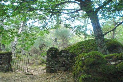 Excursiones Salamanca: Bosque de los Espejos