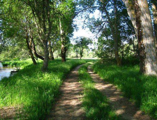 Ruta del Río Corneja y Hocino