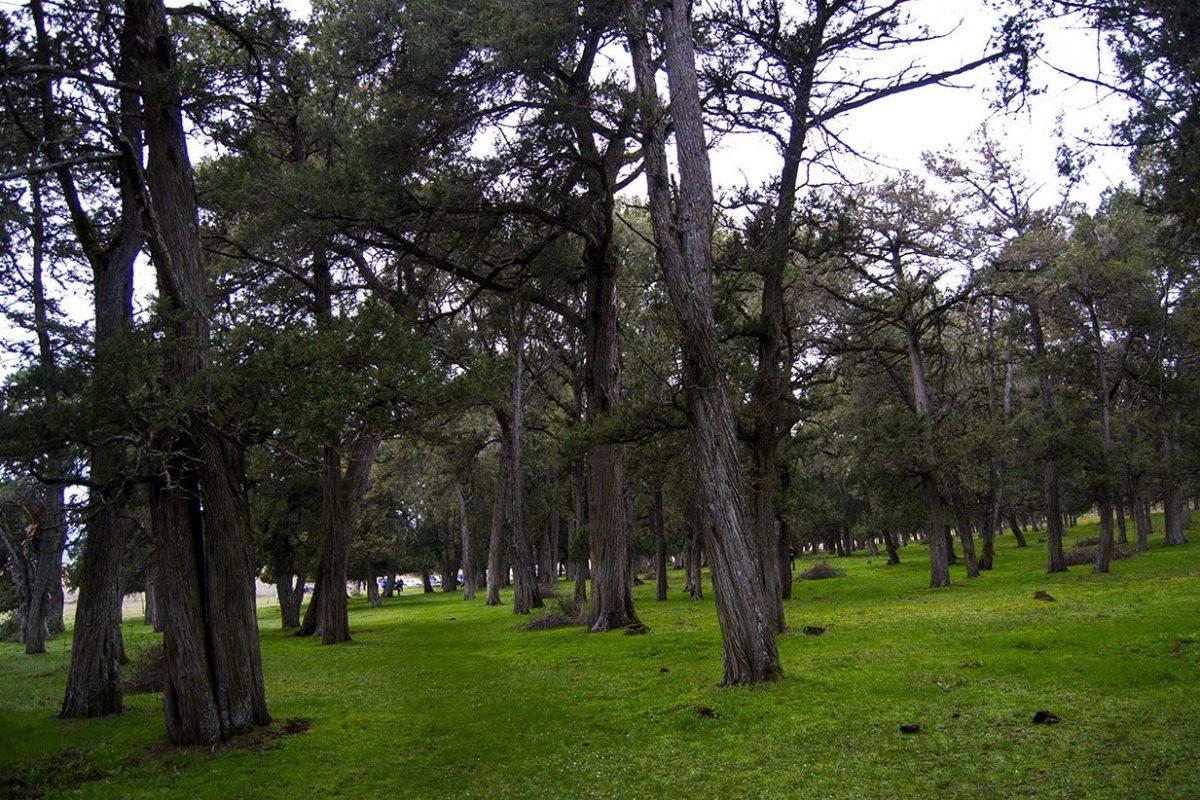 Ruta por el bosque de Sabinas albares de Catalañazor