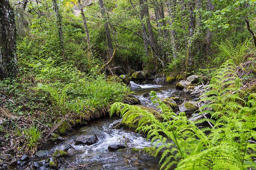 Río Noceda (Ruta de las Fuentes Medicinales)
