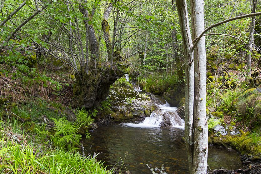 Saltos de agua del río Noceda