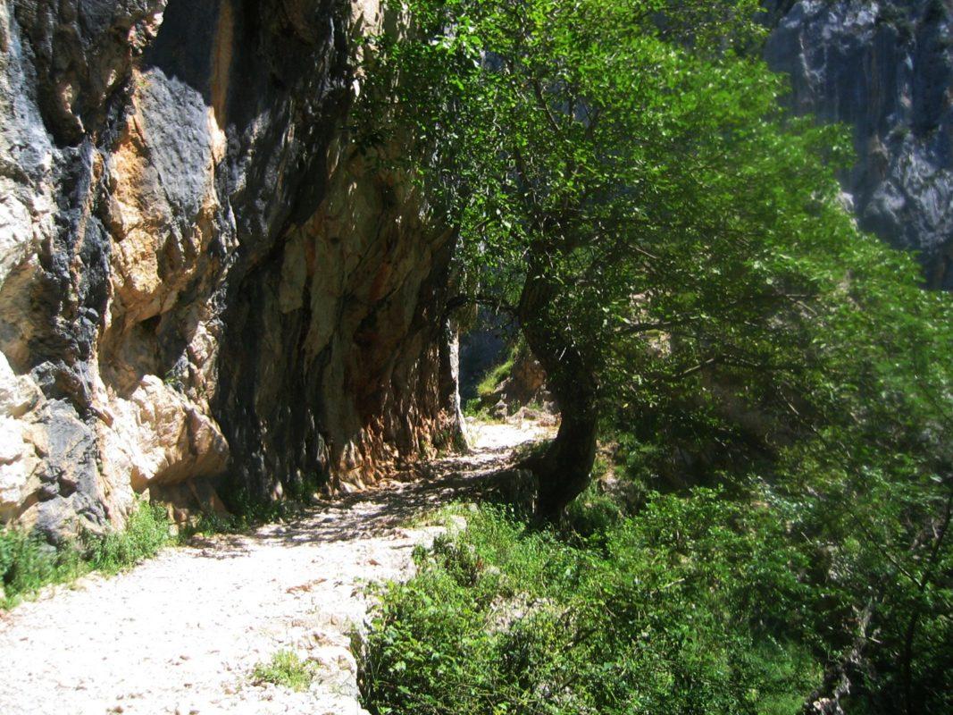 Sendero en la ruta del Cares, en León