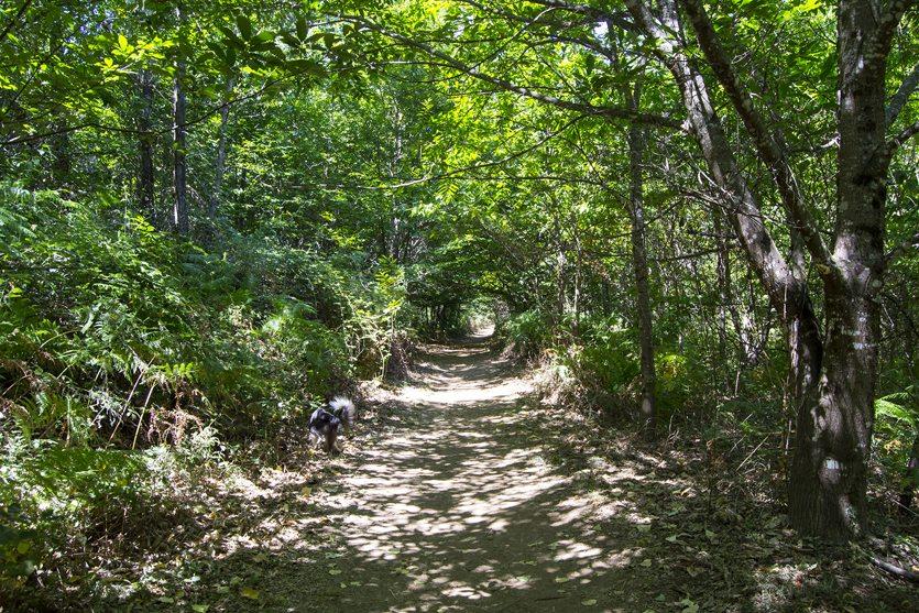Camino al Charco Verde