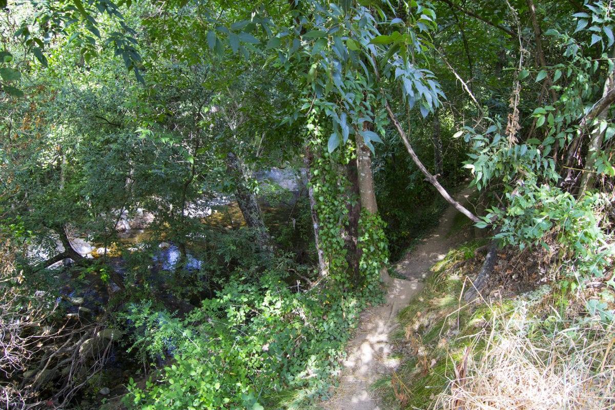 Frondosa vegetación junto al río en la Ruta de Los Pescadores