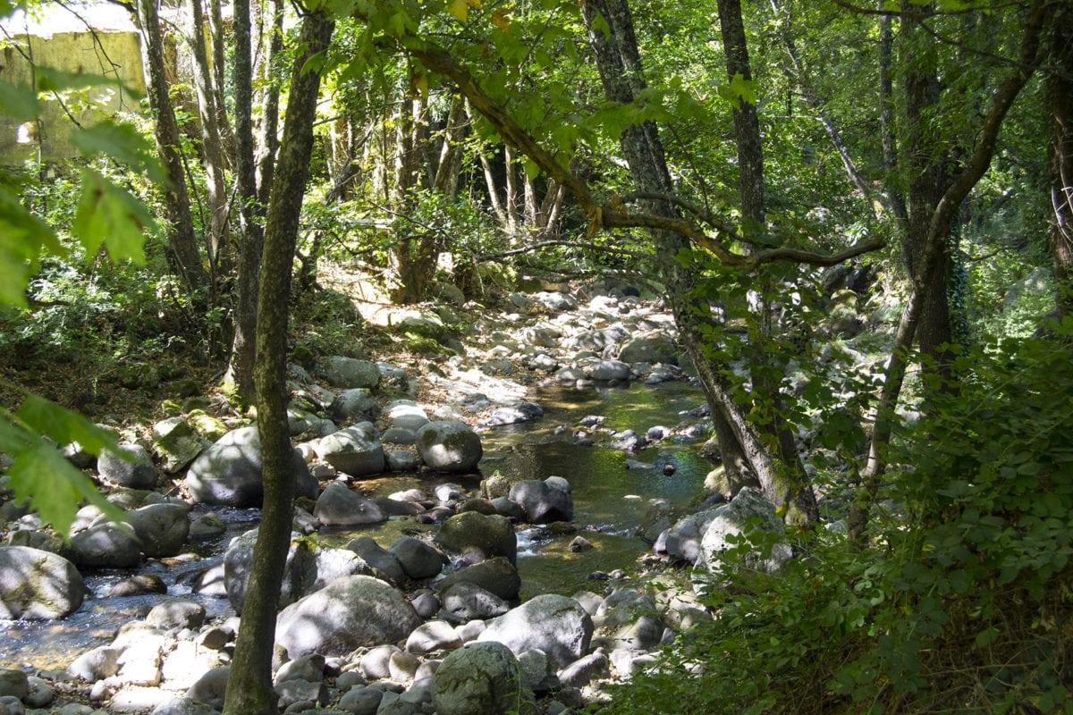 Vegetación junto al río en la Senda de los Pescadores, en Arenas de San Pedro